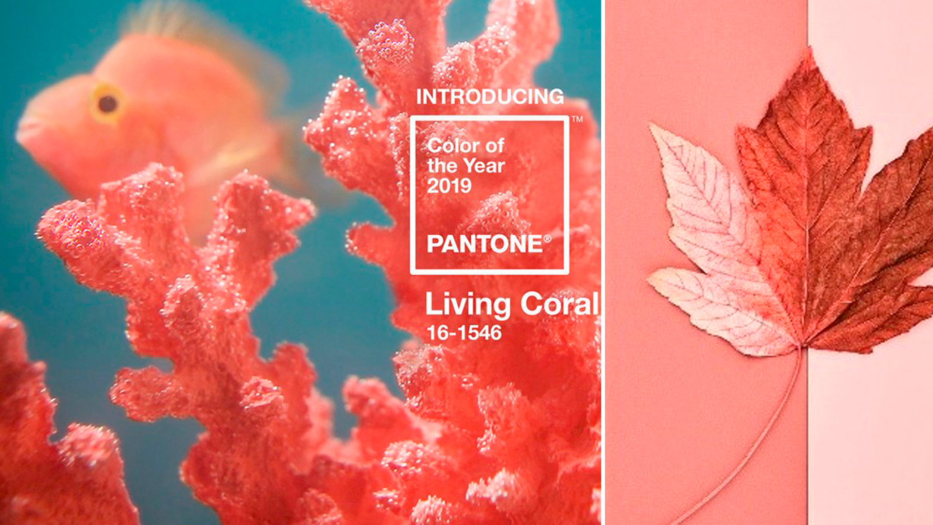 The promise of paradise in Pantone's colour of the year 2019